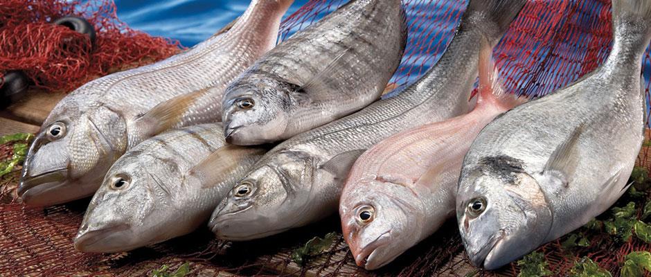 taze balıkla bayat balık